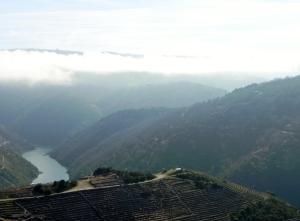 paysage vignes Galice